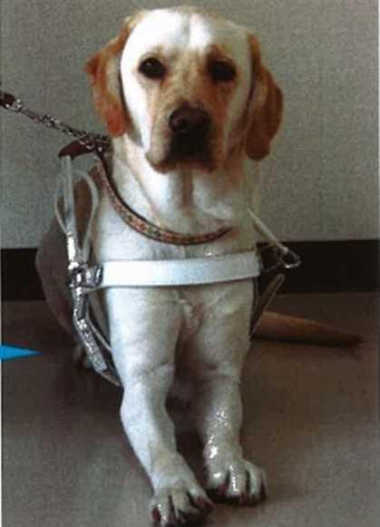 盲導犬は失禁しながらユーザーを導き その日に失踪 盲導犬を取り巻く