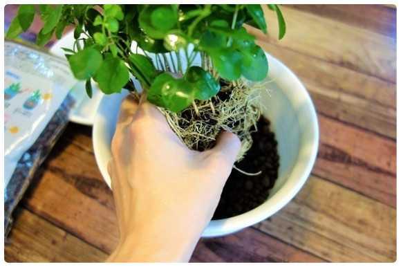 使い方 ハイドロ ボール 家庭菜園で使うハイドロボール 家庭菜園や水耕栽培は自然緑商事にお任せのブログ